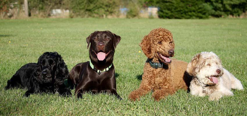 Hundeversicherung Heinrich Leenders KG
